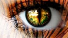 Tiger-Eye-1682