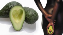 avocado-1801