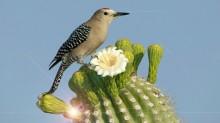 Cactus-1857