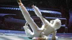 Cats 2013 será un musical de primer nivel, con una orquesta totalmente en vivo y con un ensamble que va a dejar al público con los ojos cuadrado.