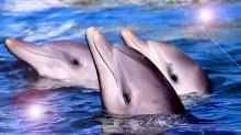 delfin-2130