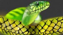 snake-2242
