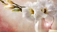 flores-blancas-2897